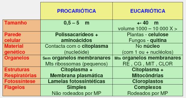 celula_eucariotica_procariotica